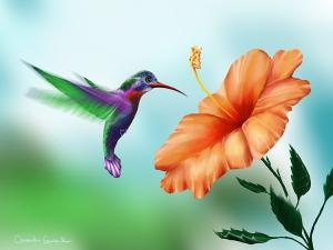 Garden Hummingbird