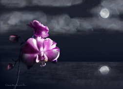 Night Orchid