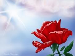 Rain-kissed (Red)