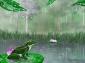 Summer Rain at Lotus Pond - by Amanda Gusack