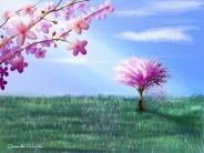 Windblown Cherry Blossoms